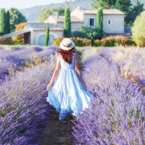 Lavender Obsession